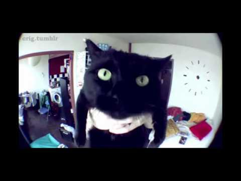 Le chat de norman 1 heure 3D