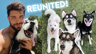 Reuniting with My Ex-Boyfriend's Dogs