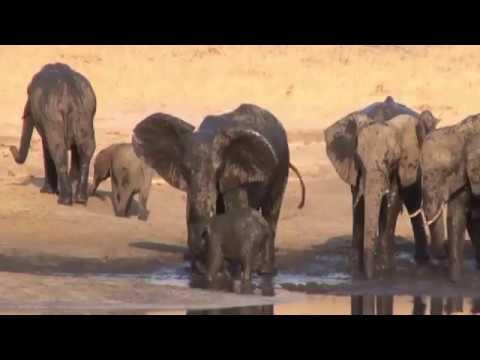 Elefant: Das Schlammbad
