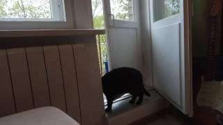 Если кошка хочет гулять, двери откроет сама.
