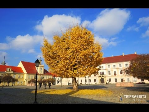 Square of Holy Trinity Old town (Osijek)