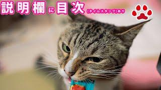 Download lagu 2021.3.4 みゃうの猫日記(説明欄に時間有)  【Miaou みゃう】