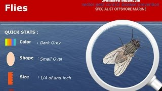 Insect Guide | House Flies Prevention Control