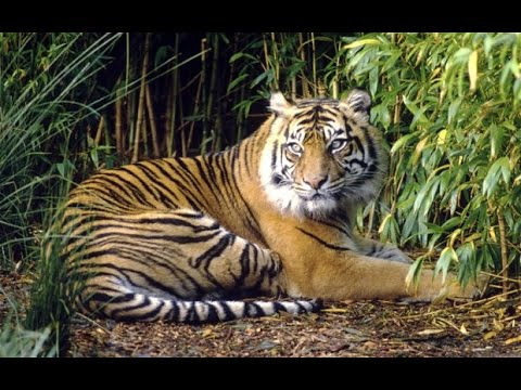 Thailand's tiger tourism booming, activists for closure