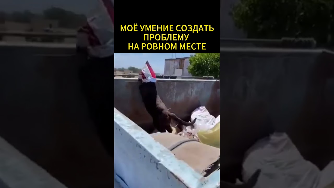проьлема на ровном месте #shorts #юмор #приколы #кот