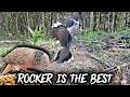 Pikat Tekukur Si Rocker Hntm Burung Liar Yang Garang  Mp3 - Mp4 Download
