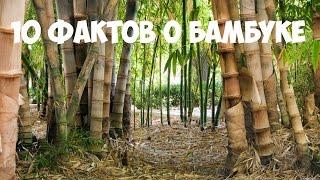 видео Что такое одежда из бамбука? Об отличиях производства одежды без химии.