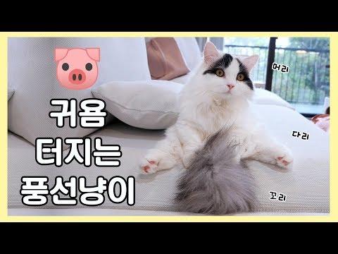 귀욤터지는 풍선 고양이 🐷 냥이가 뚱하면 얼마나 귀엽게요~