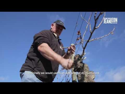 Pruning: Traditional vs. Italian System