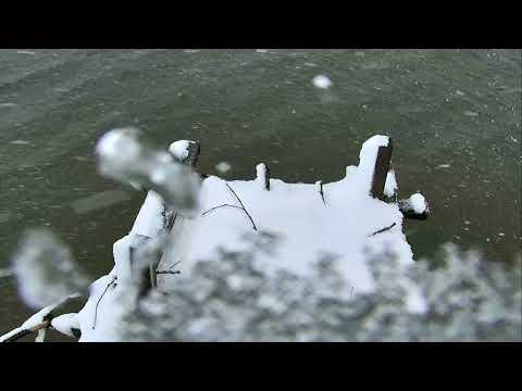 Osprey Nest - Chesapeake Conservancy Cam 03-21-2018 11:49:35 - 12:39:10