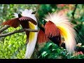 Fauna Fauna Yang Fenominal Di Alam Liar  Mp3 - Mp4 Download