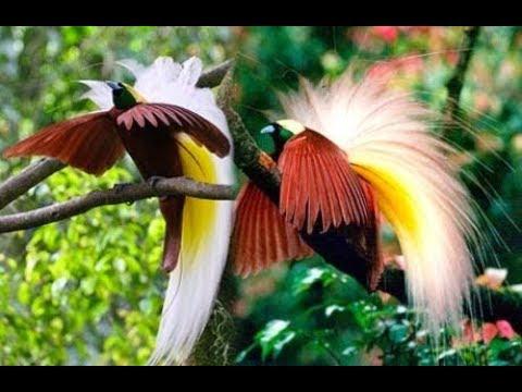 Fauna fauna yang fenominal di alam liar