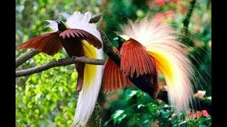 Download Mp3 Fauna Fauna Yang Fenominal Di Alam Liar