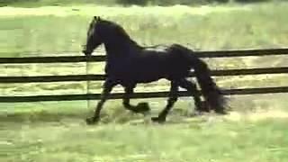 красивое видео про лошадей(, 2014-05-08T18:46:52.000Z)