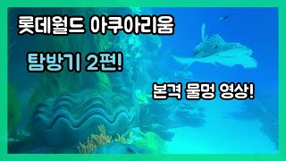 잠실 롯데 아쿠아리움(aquarium)탐방기 2편