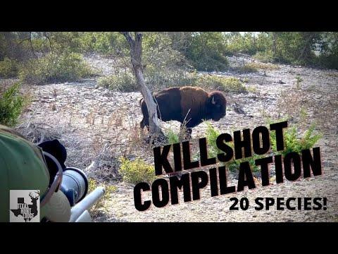 KILLSHOT COMPILATION – Texas Whitetail Deer and Exotic Hunting