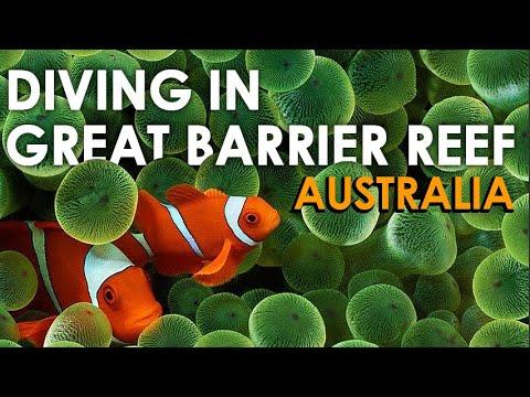 Scuba Diving Great Barrier Reef Australia   Shark Sea Turtles Clown Fish   Underwater Canon G15