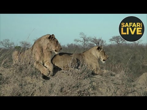 safariLIVE - Sunrise Safari - October 24, 2018