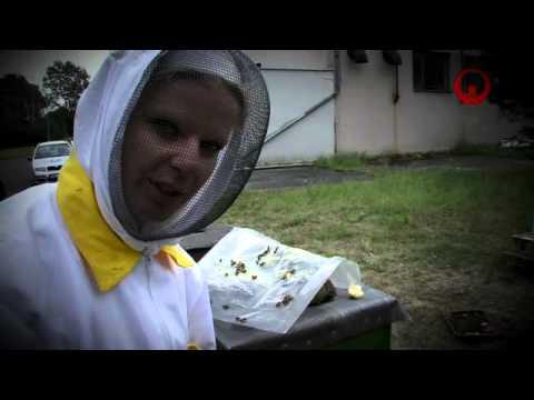 Včely pro život na Zemi (MiNiGRANTy Veolia)