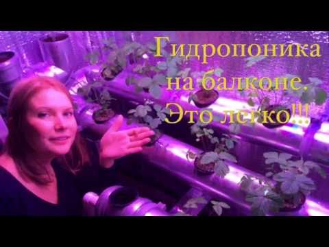 видео: Гидропоника на балконе. Это легко!!! hydroponics  on a balcony. it is easy!!!