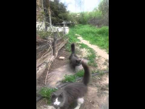 Люди спорят, действительно ли у этого котика три хвоста