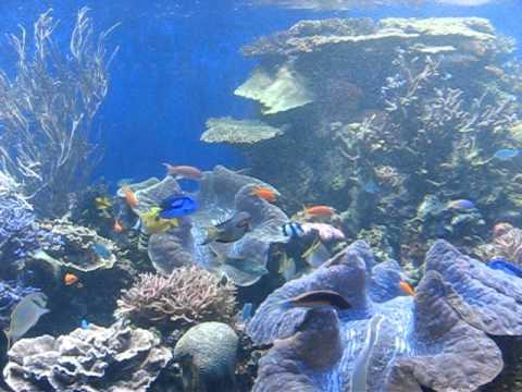 TROPICAL FISH AQUARIUM HONOLULU HAWAII