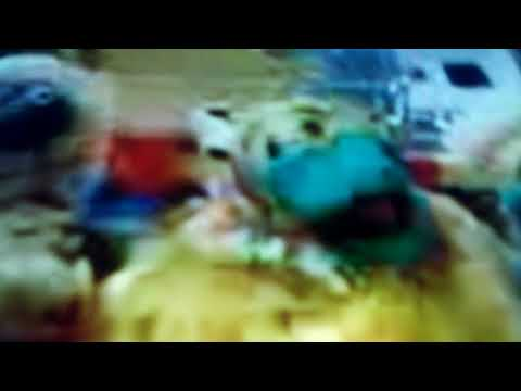 bear in the big blue house a berry bear christmas theme song - Bear In The Big Blue House A Berry Bear Christmas