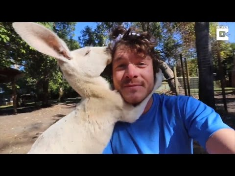 Kangaroo Slaps Dr. Dolittle Wannabe in the Face Then Can