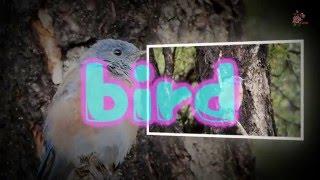 glass cutter, bird, car horn, alarm beep, hammering, bag opening sound effect 효과음112