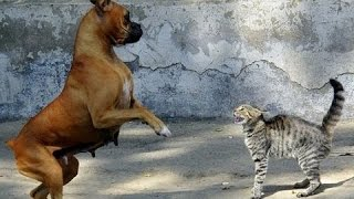 Σκυλιά Φοβούνται Τις Γάτες - Αστεία Συλλογή Των Ζώων