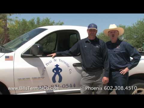 Termite Inspection Phoenix Arizona