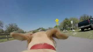 GoPro Hero 3+ dog