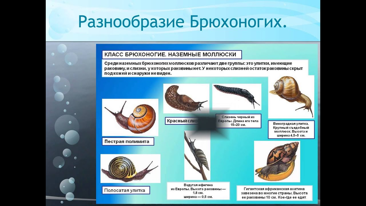 k-germafroditam-otnositsya
