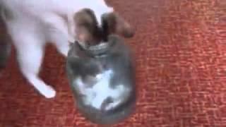 достанет ли кошка котёнка из банки
