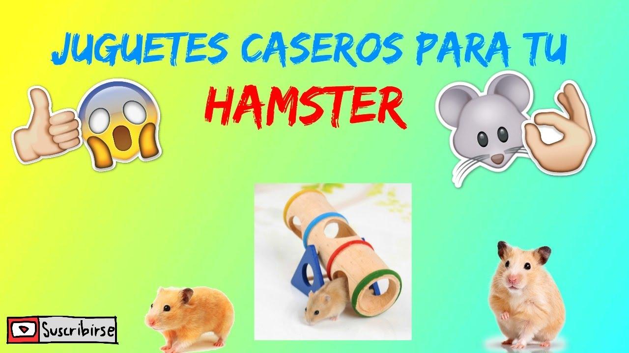 Tu Mundo El Como Hamstermis MascotasBy Las Hacer Caseros Juguetes Para Manualidades De dxWBCore