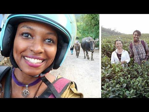 Beautiful Tea Fields in Vietnam | Cửa Tử (Đại Từ, Thái Nguyên) | Travel Vietnam | charlycheer