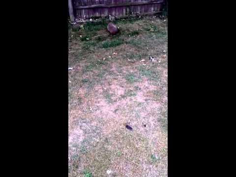 Confused Groundhog