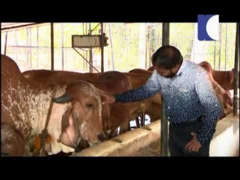 Gosala & Dairy Farm