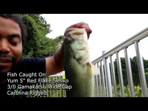 Newton Lake Park NJ - Largemouth Bass Fishing In Camden NJ