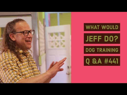 Stop Whining Puppy Eliminate Dog Excitement Pee What Would Jeff