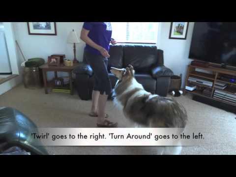 Teach the Dog Trick 'Twirl.' Collie, Go Right, Turn Around,