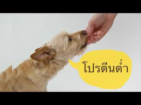 ห้ามพลาด!! สุนัขโรคไต กินอาหารอย่างไรดี by Thai Pet Academy