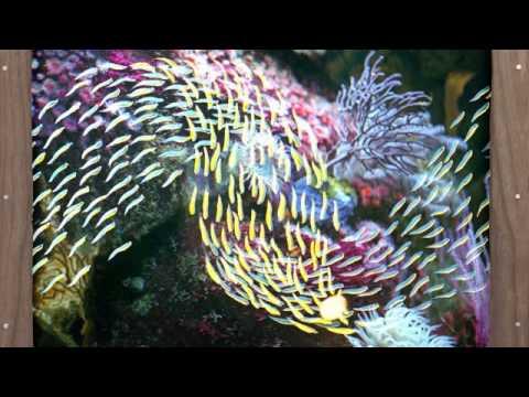 02 Quicksails - Institute's Innards [Spectrum Spools]