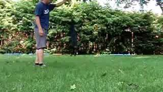 Jumping Dachshund