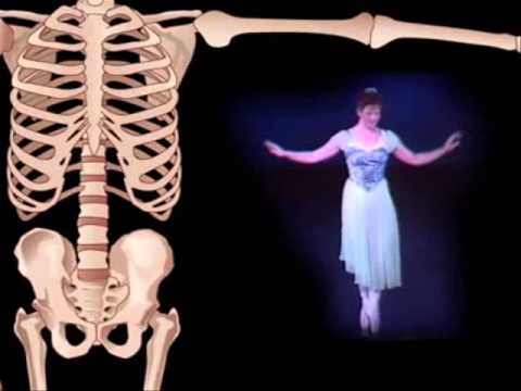 Functions of the skeletal system - YouTube