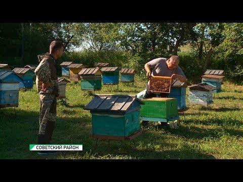 Из-за массовой гибели пчёл в Алтайском крае может появиться некачественный мёд