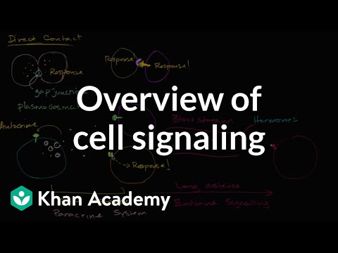 overview-of-cell-signaling