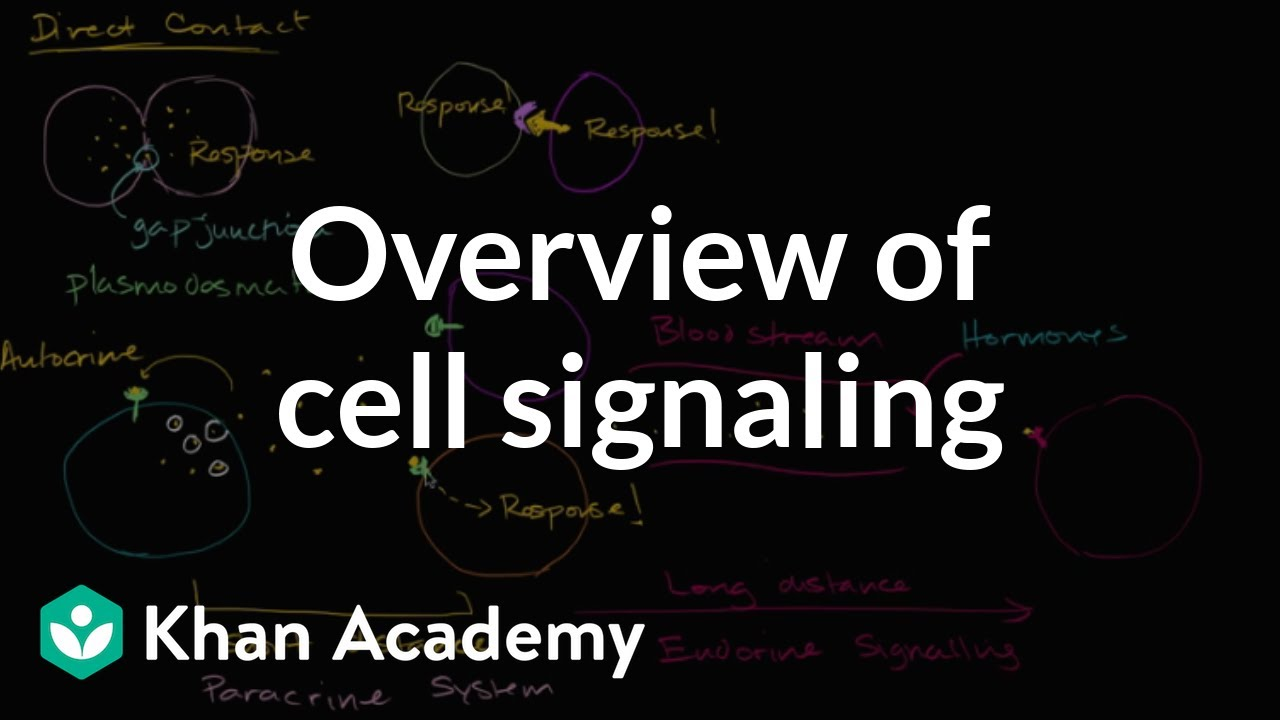 Overview of cell signaling (video) | Khan Academy