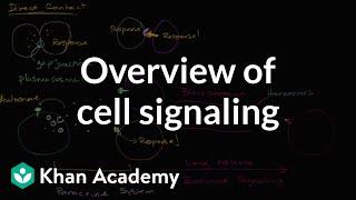 Overview Of Cell Signaling