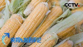 《央视财经评论》玉米价格创新高:供求虽紧 不改平衡 20200720 | CCTV财经 - YouTube